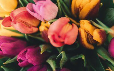 Willkommen im Frühling